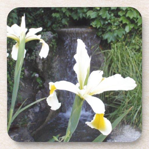 Iris jaune pâle sous-bocks