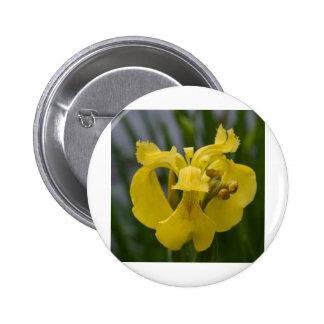 Iris jaune pin's