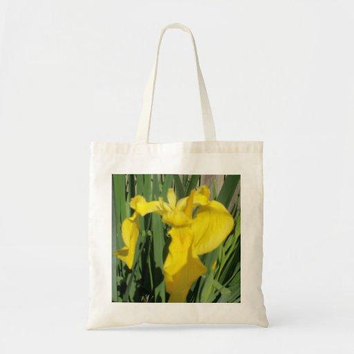 Iris jaune sacs