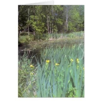 Iris jaunes autour de l'étang carte de vœux