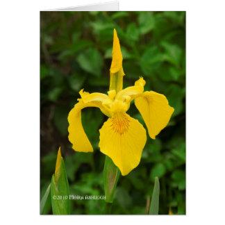 Iris jaunes carte