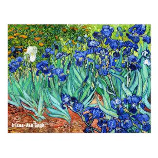 Iris par Vincent van Gogh Carte Postale