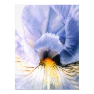Iris Performer Photo Print