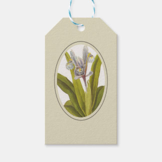 Iris Planifolia In Oval Mount Gift Tags