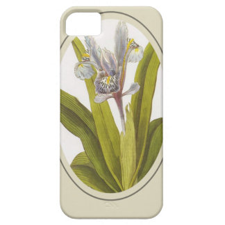 Iris Planifolia In Oval Mount iPhone 5 Cover