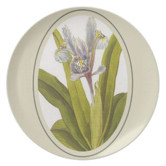 Iris Planifolia In Oval Mount Plate