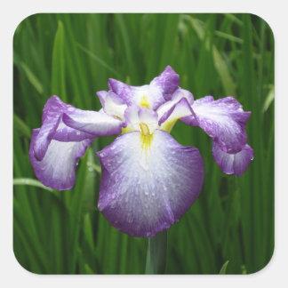Iris pourpre sticker carré
