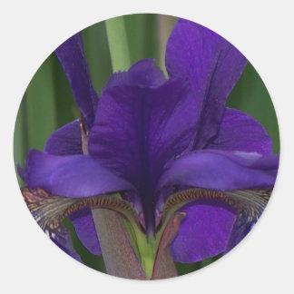Iris pourpre sticker rond