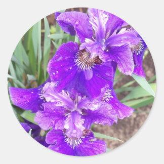 Iris pourpre avec des autocollants de gouttelettes