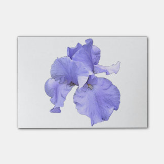 Iris pourpre barbu grand note post-it