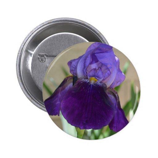 Iris pourpre badge avec épingle