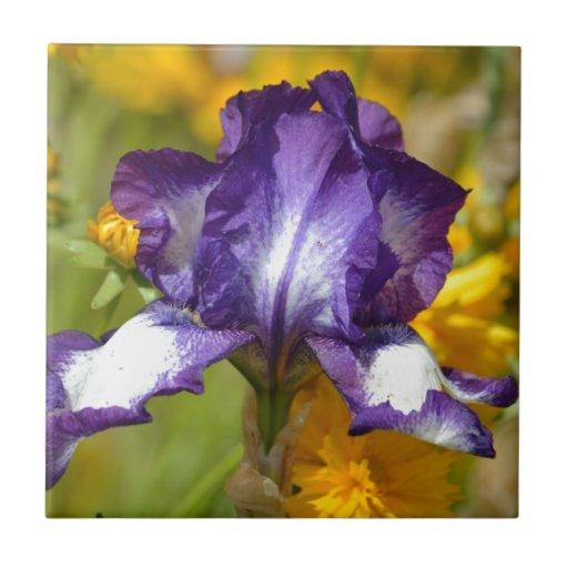Iris pourpre carreau en céramique