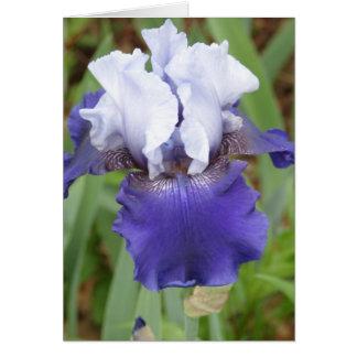 Iris pourpre carte de correspondance