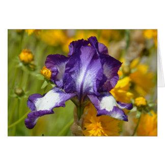 Iris pourpre carte de vœux