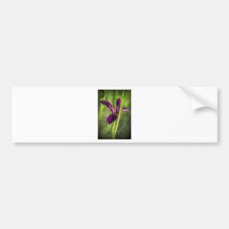Iris pourpre de coq de combat de la Louisiane Autocollant De Voiture