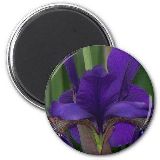 Iris pourpre magnet rond 8 cm