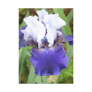 Iris pourpre toile tendue