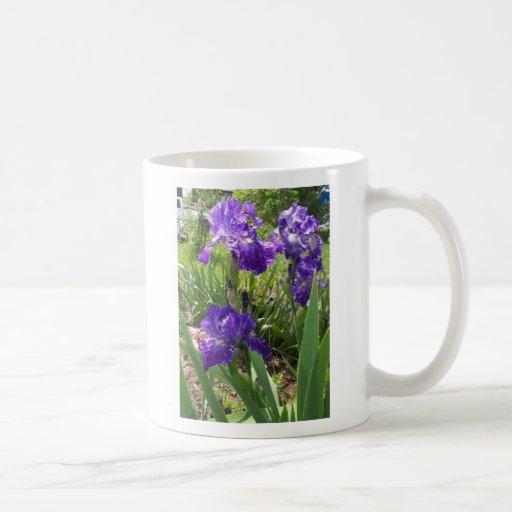 Iris pourpres et blancs tasse