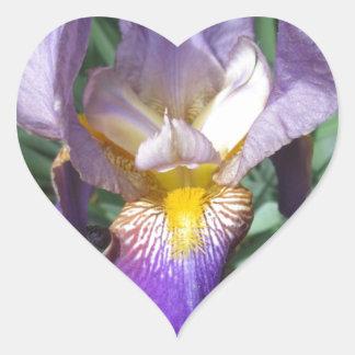 Iris Purple Bearded Heart Sticker