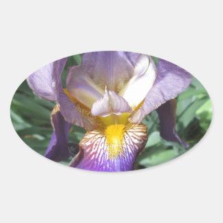 Iris Purple Bearded Oval Sticker