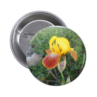 Iris Yellow Bearded 2 Inch Round Button