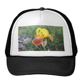 Iris Yellow Bearded Trucker Hat