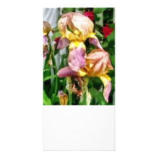 Irises By Picket Fence Card