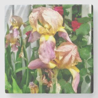 Irises By Picket Fence Stone Coaster