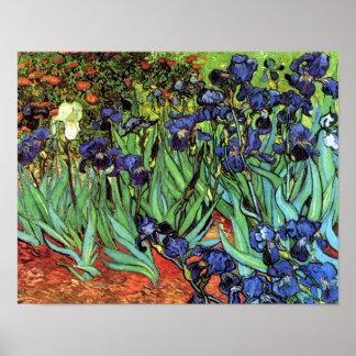 Irises by Van Gogh Fine Art Poster Print