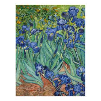 Irises by Van Gogh Postcard