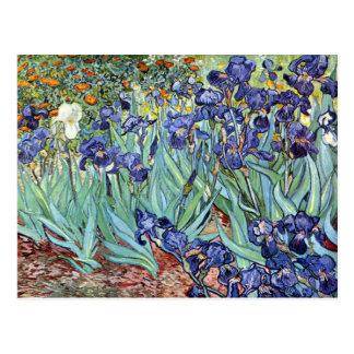 Irises by Vincent van Gogh 1898 Postcard