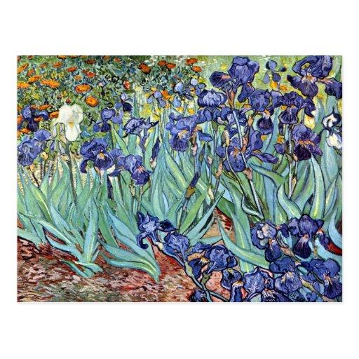 Irises by Vincent van Gogh 1898 Post Card