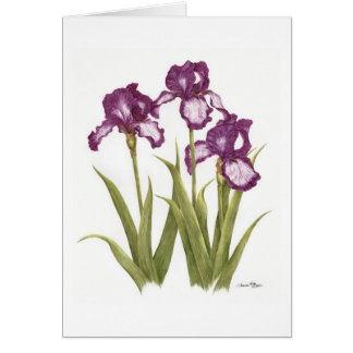 Irises - Note Card