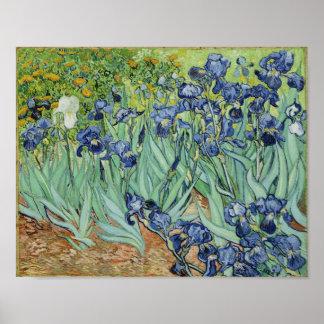 Irises - Van Gogh Print