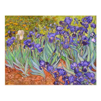 Irises Vincent Van Gogh Fine Art Postcard