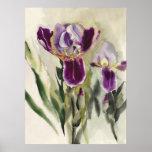 Irises watercolor painting poster