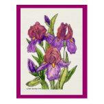 Irises Watercolor Post Cards