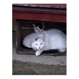 Irish Cats Take ShelterOn A Rainy Day In Ireland Postcard