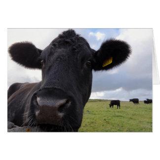 Irish cow! card