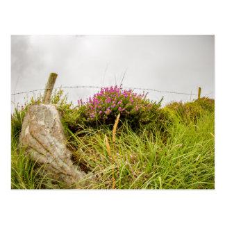 """Irish heather"" postcards"