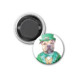 Irish Pitbull Dog Magnet
