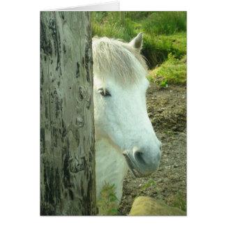Irish Pony Card