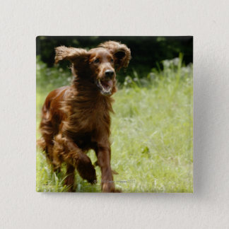 Irish Setter 2 Inch Square Button