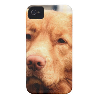 Irish Setter Case-Mate iPhone 4 Cases