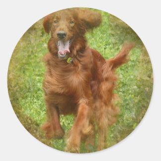 Irish Setter Dog Stickers