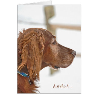 Irish Setter in snow for friendship Card
