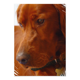Irish Setter Invitation