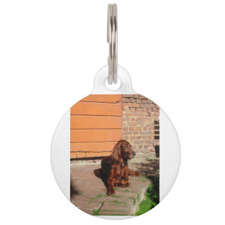 irish setter laying pet tag