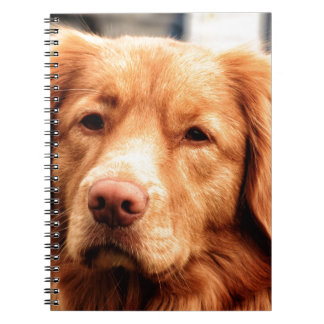 Irish Setter Notebook