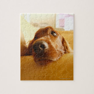 Irish Setter on sofa Jigsaw Puzzle